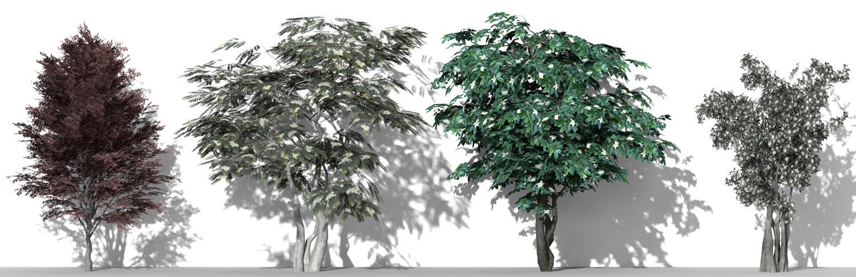 Piante 3D parametriche - Volume 10