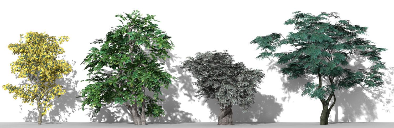 Piante 3D parametriche - Volume 11